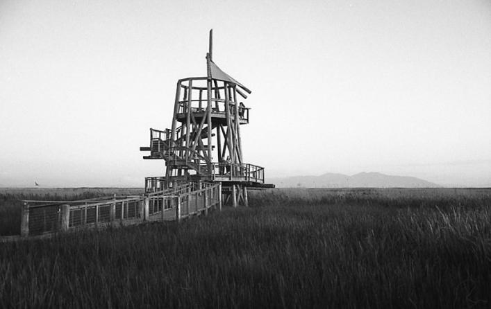 Canon Canonet G-III QL17 (1972) – The Great Salt Lake Shorelands Preserve, Layton, UT