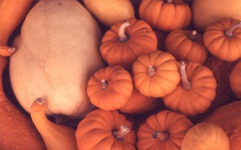 Pumpkins, Squash & Gourds - South Ogden, Utah