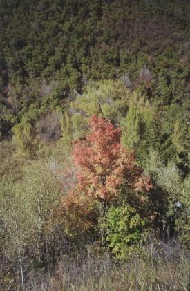 Old Snowbasin Road Fall Color - Ogden, Utah