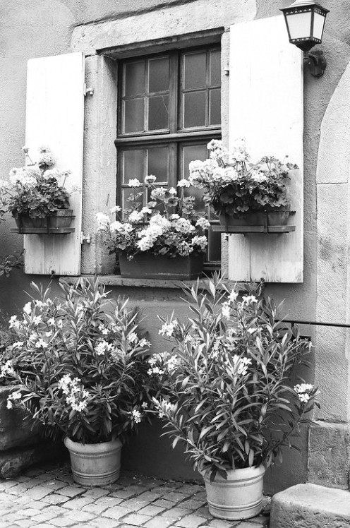 Riquewihr, France. Camera: Pentax K1000 (1976 - 1997). Film: Ilford Delta 100 Professional.