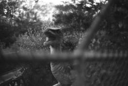 Dinosaur Park - Ogden, UT