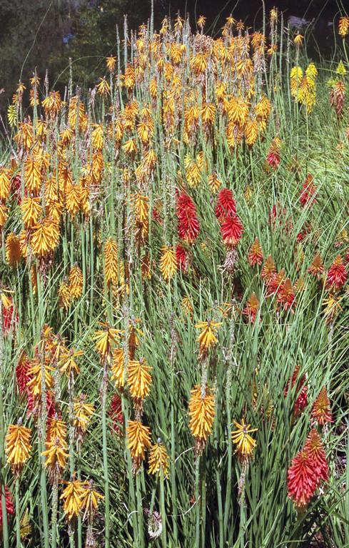 Red Butte Garden - Salt Lake City, Utah