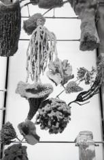 American Museum of Natural History - NY (Olympus XA - Kodak Tri-X 400)