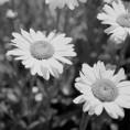 Flowers - South Ogden, UT